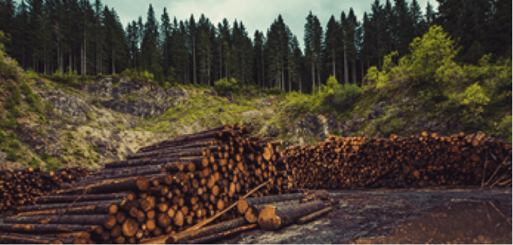 Timber Environment Responsible Supplier